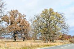 在秋天时间的色的树,在高速公路附近,橙黄叶子 库存图片