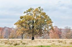 在秋天时间的色的树,室外公园,橙黄叶子 免版税库存图片