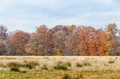 在秋天时间的色的树,室外公园,橙黄叶子 免版税图库摄影