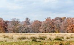 在秋天时间的色的树,室外公园,橙黄叶子 库存图片
