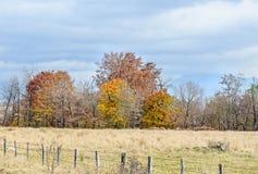 在秋天时间的色的树,室外公园,橙黄叶子 库存照片