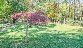 在秋天时间的色的树,室外公园 免版税库存图片