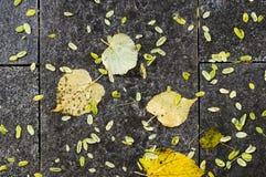 在秋天晚上弄湿铺磁砖的地面 背景,纹理 库存照片