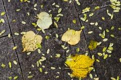 在秋天晚上弄湿铺磁砖的地面 背景,纹理 免版税图库摄影