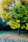 在秋天月期间,一棵树 免版税库存照片