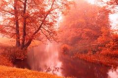 在秋天有雾的河的秋天颜色 库存照片