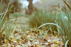 在秋天期间的审美高草在新宿Gyoen全国庭院,东京,日本里 库存照片