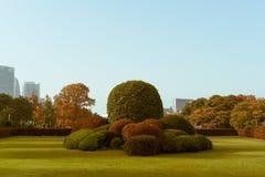 在秋天期间的日本黄杨木潜叶虫灌木在新宿Gyoen全国庭院,东京,日本里 免版税库存图片