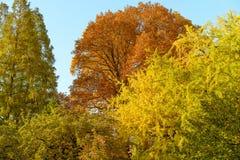 在秋天期间的树在普遍的代代木公园,涩谷,东京,日本晒干 图库摄影