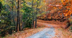 在秋天期间的森林公路 免版税图库摄影