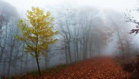 在秋天期间的森林道路 免版税库存照片