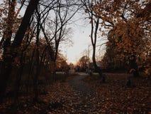 在秋天期间的连续道路 免版税库存图片