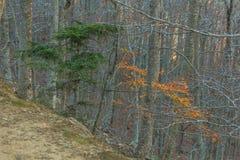在秋天期间,山采取颜色 图库摄影