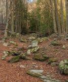 在秋天期间,山采取颜色 库存图片