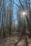 在秋天期间,山采取颜色 库存照片