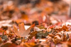 在秋天期间,布朗五颜六色的秋天在堆离开 Sel 免版税图库摄影