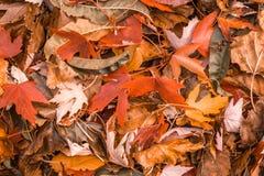 在秋天期间,橙色和棕色明亮的秋天上色了叶子 免版税库存图片