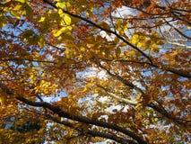 在秋天期间, Tan上色了叶子 图库摄影