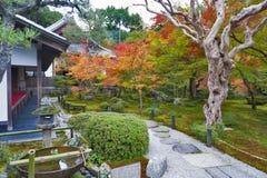 在秋天期间的日本红槭树在Enkoji寺庙的庭院里在京都,日本 免版税库存照片