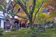 在秋天期间的日本红槭树在Enkoji寺庙的庭院里 库存照片