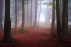 在秋天期间的有雾的神秘的森林 免版税库存图片