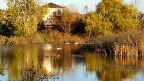 在秋天期间的沼泽地 免版税库存图片