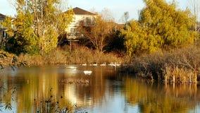 在秋天期间的沼泽地 图库摄影