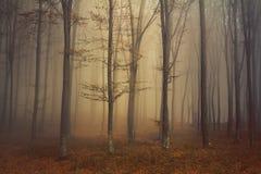 在秋天期间的神奇有薄雾的森林 免版税图库摄影