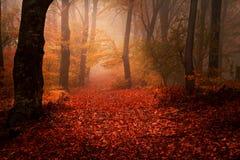 在秋天期间的美丽的森林 库存图片