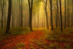 在秋天期间的美丽的森林 图库摄影