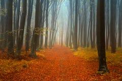 在秋天期间的美丽的森林 免版税库存照片