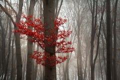 在秋天期间的美丽的森林 库存照片