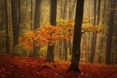 在秋天期间的美丽的森林 免版税图库摄影