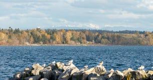 在秋天期间的自然在温哥华加拿大2016年10月 免版税库存图片