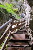 在秋天期间的Wolfsklamm峡谷在施坦斯,奥地利 库存图片
