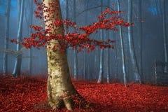 在秋天期间,与红色的树在蓝色有雾的森林离开 免版税库存照片
