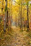 在秋天期间,五颜六色的叶子盖了足迹在公园 库存照片