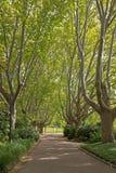 在秋天期间,平安的树在皇家植物园排行了道路 库存照片