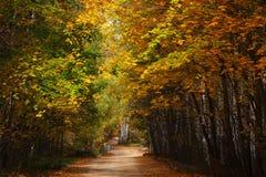 在秋天木头的乡下公路。 库存照片