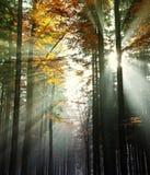 在秋天木头的太阳射线 库存照片