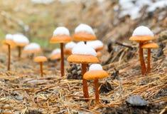 在秋天木头的蘑菇 免版税库存图片