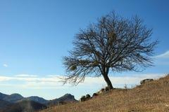在秋天末期的树 免版税库存照片