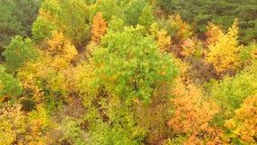 在秋天林木冠的飞行  股票视频