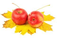在秋天枫叶的两个美丽的苹果 免版税图库摄影