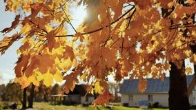 在秋天树下叶子的村庄房子  在谷仓的秸杆 晴朗的日 秋天横向 股票视频