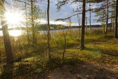 在秋天树中的太阳 库存照片