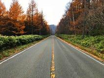 在秋天树之间的一条路 免版税库存图片