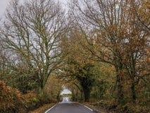 在秋天树之间的路 免版税库存图片