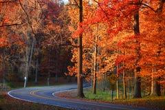 在秋天树的弯曲道路 免版税库存图片