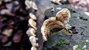 在秋天树的蘑菇 免版税库存照片